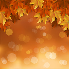 Thanksgiving ,autumn blur background