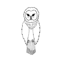 hand draw an owl in the style of the sketch to design cards