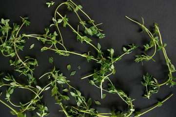 Thyme leaves herb on black background