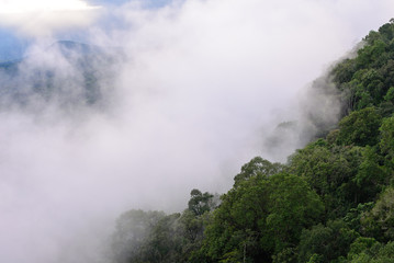 Mist forest on top of mountain in forest.