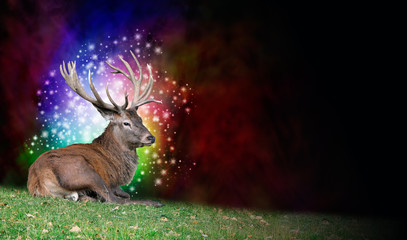 Stag Party Background - a mature stag seated on grass on left with multicolored sparkling ball of light behind head on a deep red and black background with copy space on right side