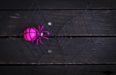 Pink spider on dark wood floor