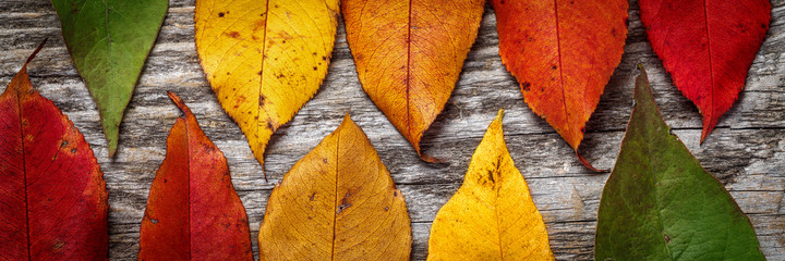 Colorful autumn leaves on wooden background