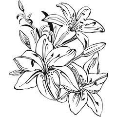 Graphical lily bouquet. Vector.