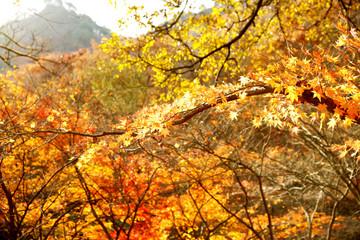 아름다운 가을의 모습