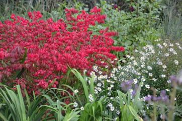 Bunter Herbstgarten - Roter Herbststrauch im Blumenbeet