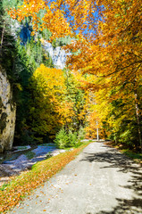 The colors of autumn. Autumn landscape in mountains with colorful forest and blue sky.