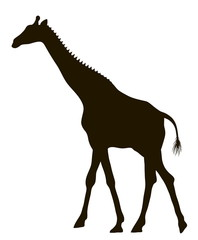 Vector drawing silhouette of a moving giraffe