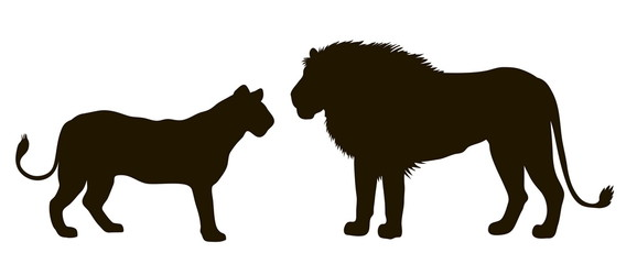 Vector silhouette of a pair of lions