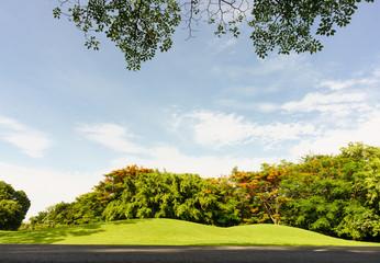 view under big tree in Public Park,Vachirabenjatas Park (Rot Fai