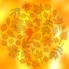 Bright autumn design: circle made of leaves black outlines on blurred orange and yellow background. Various trees leaves: linden, ash, oak, maple, chestnut, birch, elm, willow, aspen, rowan.