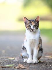 三毛猫の子供