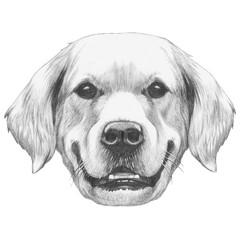 Portrait of Golden Retriever. Hand drawn illustration.