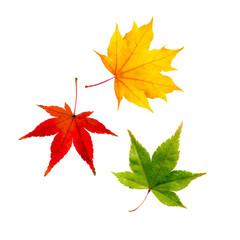 Wall Mural - bunte Herbstblätter vor weißem Hintergrund in rot, grün, gelb