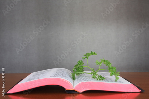Livre Ouvert Stock Photo And Royalty Free Images On