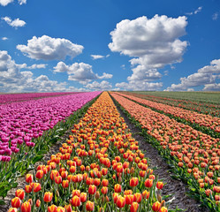 Fantastic landscape with colorful flowers tulips against the sky