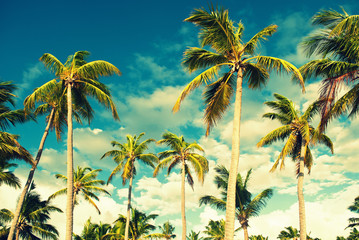 Tropical sky and palm trees. Vintage retro colors post processed. Vacation, Caribbean, tropical, travel,  and destination wedding concept