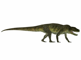 Postosuchus Reptile Profile - Postosuchus was a aquatic predatory reptile that lived in North America in the Triassic Period.