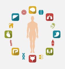 Infographic of Internal Human Organs