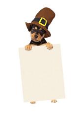 Fototapete - Thanksgiving Puppy Dog Holding Blank Sign