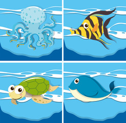 Four different sea animals