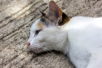 Domestic lovely cat pleasantly lie down on cement floor