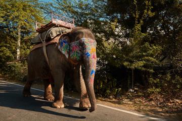 Painted elephant walking on road in Japiur city