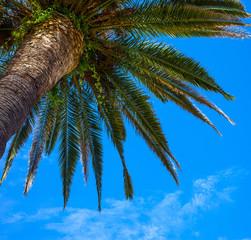 Kroon palms