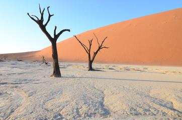 Dead Vlei in Namib desert, Namibia, Africa