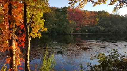 Autumn trees over river with fall colored leaves.