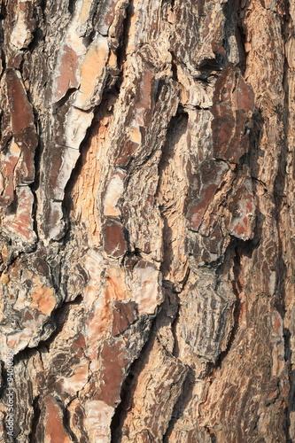 Corteccia di albero di pino