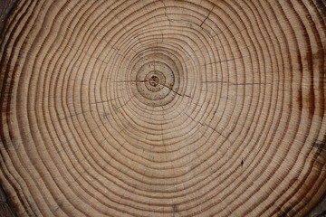Föhren Holzstruktur