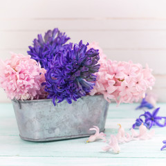 Fresh pink  and violet hyacinths flowers in  bowl