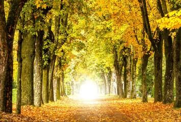 (Melancholische) Herbstidylle