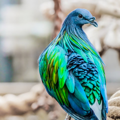 Blue green Bird