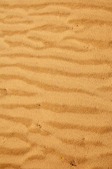 Tesxture of the sand in desert. Central part of Oleshky Sands in spring,  Kherson Oblast