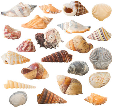 Many seashells isolated on a white background, 22 in total.