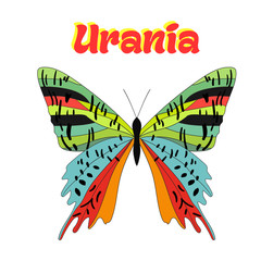 Butterfly urania vector illustration