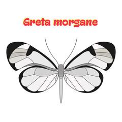 Butterfly greta morgane vector illustration