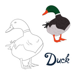 Educational game coloring book duck bird vector