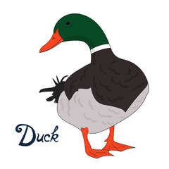 Bird duck vector illustration