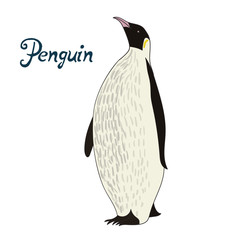 Bird penguin vector illustration