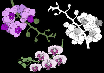 illustration with three orchid blossoming branches on black