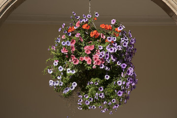 Hanging Basket of Pansy - Violet Flowers