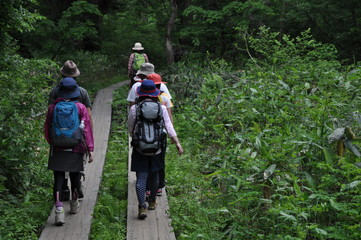尾瀬の木道を歩く人々
