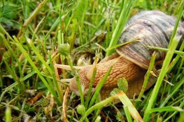 Macro shot on snail after rain on mountain village in Macedonia