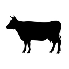 Vector black silhouette of the cow isolated on white background