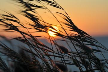 Soleil couchant sur la baie de St Brieuc