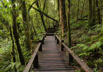 Footpath travel in Nature Trail