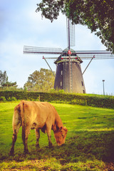 Windmill and cow in Holland meadow